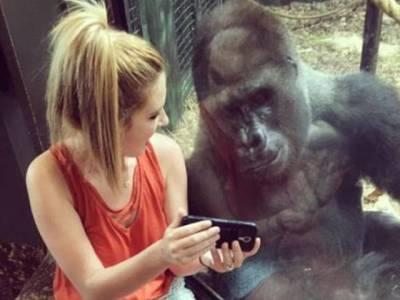 یہ لڑکی اس گوریلے کو فون پر کیا دکھارہی ہے جو یہ خاموشی سے دیکھ رہا ہے؟ جان کر آپ کو بھی اچھا لگے گا