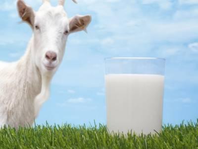بکری کا دودھ پینے والوں کو ثواب توملے گا ،غذائی اعتبار سے بچوں بوڑھوں اور جوانوں کے لئے اس سے بہتر اور کوئی دودھ بھی نہیں ہے،حیران کن انکشافات