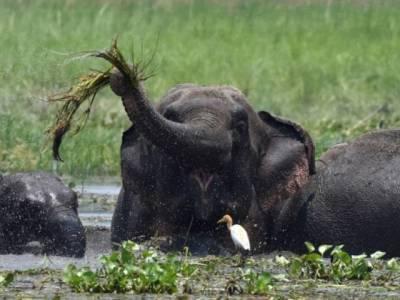 بھارت میں بدمست ہاتھی نے 15 لوگوں کو ہلاک کر دیا،حکام نے مارنے کی تیاریاں شروع کردیں