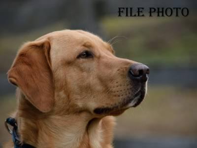 جوہانسبرگ،کھائی میں گرنے والے کتے کو ریسکیو اہلکاروں نے تین دن بعد بچا لیا