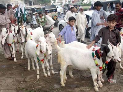 غیر قانونی مویشی منڈیوں کے خلاف کریک ڈوان کا آغاز کیا جائے: وزیر داخلہ سندھ