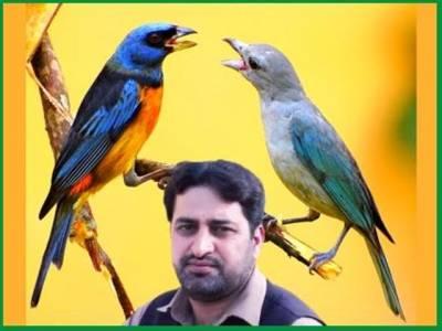 پرندوں کے گیت سن کربیمار صحت مند، بچے چست ہوجاتے ہیں