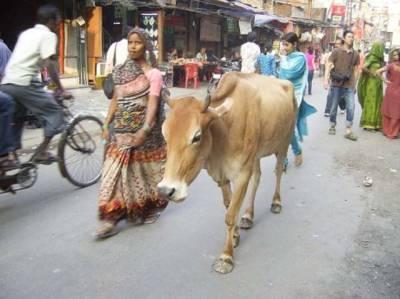 بھارت میں گائے اور بھینسوں پر تیزاب سے حملے، بھارتی ریاست میں کشیدگی بڑھنے لگی