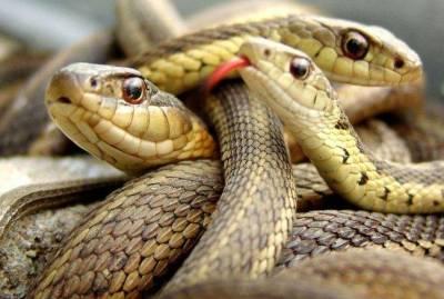 اونٹ کی طرح دراز چار ٹانگوں والا خوبصورت ترین سانپ،یہ کہاں رہتاتھا،رینگنے پر کیوں مجبور ہوا؟