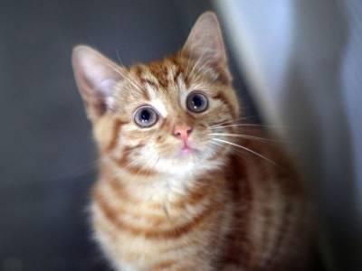 خبردار ! بلی کے کاٹنے سے موت بھی واقع ہوسکتی ہے اگر۔۔۔ وہ واقعہ جس کے بارے میں جان کر آپ بھی ہمیشہ احتیاط پر مجبور ہوجائیں گے