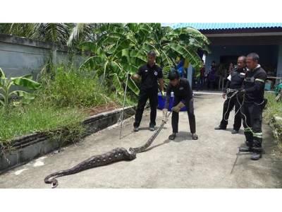 کچن میں سانپ اور اس کا پھولا ہوا پیٹ، خاتون نے گھبرا کر پولیس بلالی، بالآخر پکڑا گیا اور الٹی کردی تو پیٹ سے کیا چیز نکلی؟ دیکھ کر بیچاری خاتون رو رو کر ہلکان ہو گئی کیونکہ۔۔۔
