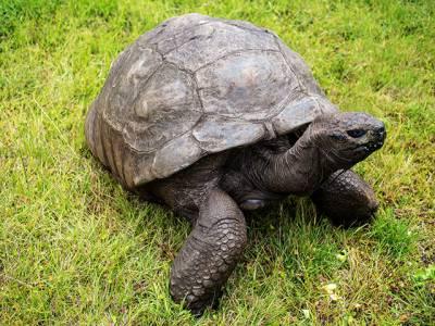 دنیا کا سب سے بوڑھا باسی، وہ جاندار جس کی عمر 186 سال ہے، یہ کونسا جانور ہے؟ جان کر آپ کی حیرت کی انتہا نہ رہے گی