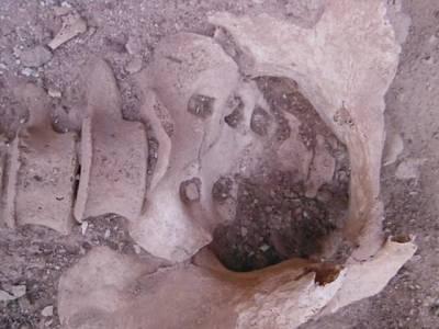 حضرت سلیمان علیہ السلام کی سرنگوں کے قریب سائنسدانوں کو حاملہ خاتون کی 3 ہزار سال پرانی باقیات مل گئیں، یہ کون تھی؟ جان کر دنیا بھر کے ماہرین بھی چکرا گئے
