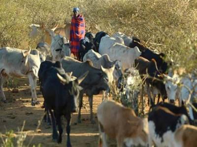 کینیا اور تنزانیہ کے درمیان گائے اور چوزوں کی وجہ سے سفارتی تنازعہ پیدا ہوگیا