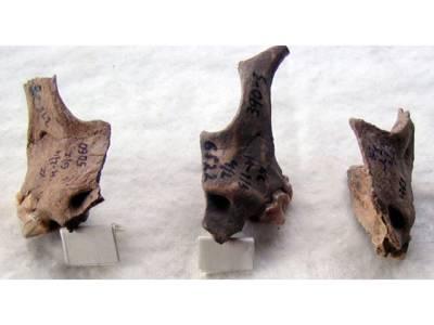 روس میں سائنسدانوں کو زمین میں دبائی درجنوں کتوں کی 4 ہزار سال پرانی لاشیں مل گئیں، موت سے پہلے ان کے ساتھ کیا کیا گیا؟ آج کا کوئی انسان تصور بھی نہیں کرسکتا