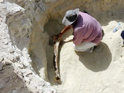 سعودی عرب میں 5 لاکھ سال پرانے ہاتھی کی باقیات دریافت
