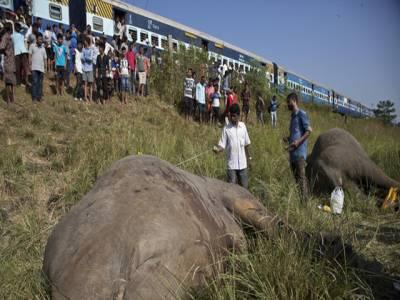 بھارت میں ٹرین کے ساتھ تصادم کے نتیجے میں نایاب نسل کے 2 ہاتھی ہلاک