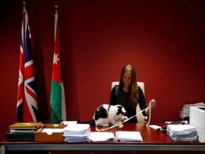 برطانیہ کے سفارت خانے نے بلی کو بھر تی کر لیا