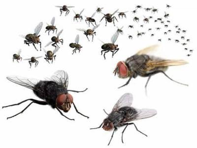 خواب میں مکھیاں مارنے والے ہوشیار ہوجائیں ،ایسی تعبیر جو انسان کو ان لوگوں سے ملوا سکتی ہے جس سے وہ ملنا پسند نہیں کرتے ،یہ کون لوگ ہیں ،جا نئے اس خواب کی تعبیر