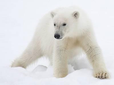 وہ جانور جس کا جگرکھانے سے انسان کے پورے جسم سے جلد اُتر جاتی ہے
