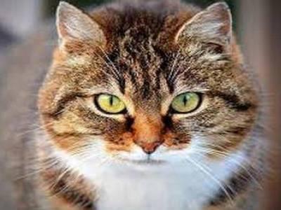 ''خواب میں بلی کے ساتھ ۔۔۔''ایسی تعبیرجسے جان کر آپ کو پسندیدہ پالتو جانور کی ایک انوکھی خوبی کا علم ہوجائے گا