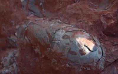 چین میں کھدائی کے دوران سائنسدانوں کو 13کروڑ سال پرانا انڈہ مل گیا، یہ کس چیز کا انڈہ ہے جو ابھی بھی سلامت ہے؟ دیکھ کر ہی ہر کسی کی سٹی گم ہوگئی، یہ تو سوچا بھی نہ تھا کہ۔۔۔