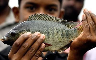 'ہفتے میں کم از کم ایک دفعہ مچھلی کھانے سے اس چیز کا بہت مزہ آتا ہے' سائنسدانوں نے بہترین مشورہ دے دیا