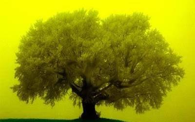 کیا آپ جانتے ہیں جب خواب میں اس قسم کے درخت نظر آنے لگ جائیں تو انکی تعبیر کیا ہوتی ہے؟ایک ایسی بات جسے جان کر آپ بہت زیادہ فائدہ اٹھا سکتے ہیں