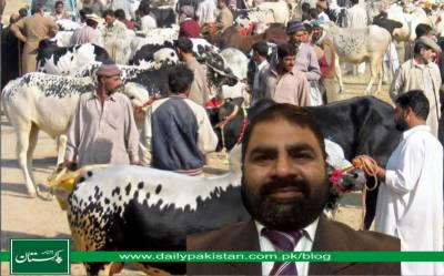 مویشی منڈیوں کا کلچر
