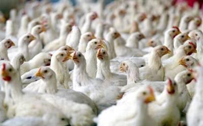 انسانوں کے بعد مرغیاں بھی محفوظ نہ رہیں، آدمی مرغی کے ساتھ ایسا شرمناک ترین کام کرتے رنگے ہاتھوں پکڑا گیا کہ سن کر ہی انسان شرم سے پانی پانی ہوجائے