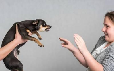 'کتے اس ایک قسم کے انسانوں کو زیادہ کاٹتے ہیں' سائنسدانوں نے سب سے حیران کن انکشاف کردیا