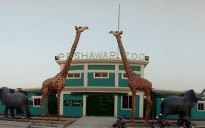 خیبرپختونخوا حکومت نے کام دکھادیا، پشاور میں پہلی مرتبہ ایسی چیز بنادی کہ عوام کے چہرے خوشی سے کھل اُٹھے