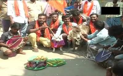 احتجاجاً کتے اور گدھی کی شادی کروادی گئی، کس چیز کے احتجاج میں یہ کام کیا گیا؟ آپ سوچ بھی نہیں سکتے کہ ایسا بھی ممکن ہے