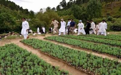 کے پی کے حکومت نے جیو ٹی وی کو ایک کروڑ پودوں کا آرڈر دے دیا کیونکہ ۔۔۔ایسی خبر آگئی کہ پڑھ کر پاکستانیوں کی ہنسی نہ رکے گی
