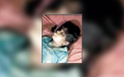 12 سالہ بچی زیادتی کے بعد گلا دبا کر قتل ،نعش خالی جھگی سے برآمد