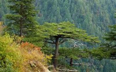 جنگل بچالو انسانوں کے لئے