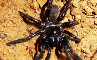 دنیا کی سب سے بڑی عمر کی مکڑی وفات پاگئی، مرحومہ کی عمر کتنی تھی؟ جانئے