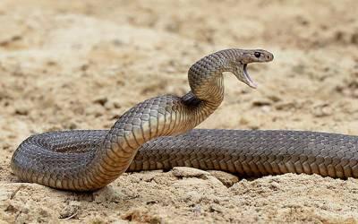 دوران شوٹنگ سانپ کے کاٹنے سے اداکارہ جاں بحق
