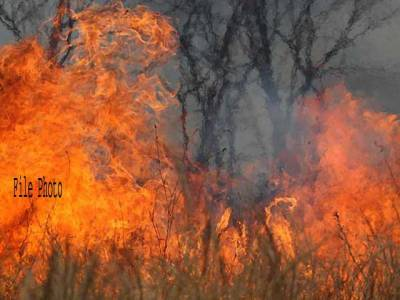 نندی پور پاور پلانٹ سے ملحقہ جنگل میں آگ بھڑک اٹھی، فائر بریگیڈ کا عملہ آگ بجھانے میں مصروف عمل