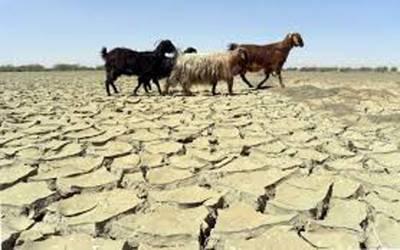 ملک میں آب و ہوا بدلنے سے جانور اور فصلوں کو شدید نقصان پہنچ رہا ہے