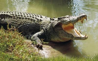 ایتھیوپیا کی جھیل میں مگرمچھ نے حملہ کرکے پادری کوہلاک کردیا