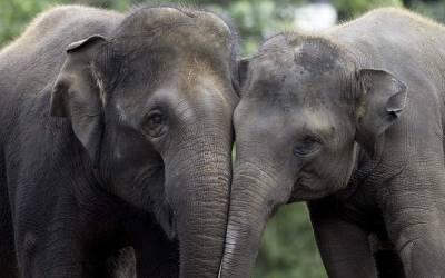 """""""جانور بھی انسانوں کی طرح آپس میں یہ کام کرتے ہیں """" ایسی تحقیق آ گئی کہ سن کر ہی آپ دنگ رہ جائیں گے"""