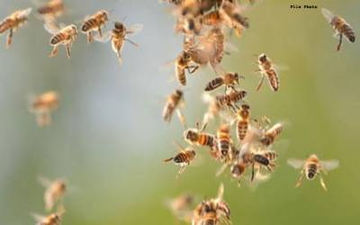 ماہرین نے شہد کی مکھیوں کو ایسا خطرناک کام کرنے لئے تیار کرلیاکہ جان کر آپ بھی دنگ رہ جائیں گے