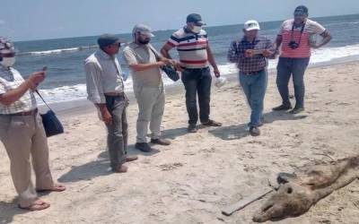 مصر، ساحل سمندر پر عجیب الخلقت مخلوق نمودار،شہری خوف و ہراس کا شکار