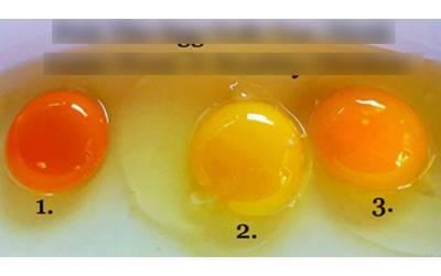 ان انڈوں کے رنگ میں فرق کیوں ہے، کون سا صحت مند مرغی سے آیا؟ اگلی مرتبہ انڈہ خریدنے سے پہلے یہ خبر ضرور پڑھ لیں
