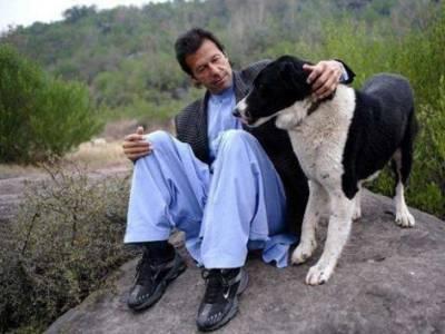 کپتان باضابطہ وزیراعظم نامزد ، ان کے کتے بھی شہرت کی بلندیوں پر پہنچ گئے، وکی پیڈیا نے ان کتوں کیلئے کیا کردکھایا؟ انتہائی حیران کن خبرآگئی