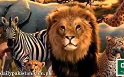 خطرناک جنگلی جانوروں سے بچاؤ کے ایسے آسان طریقے کہ جان کر آپ بھی '' شیر '' ہو جائیں گے