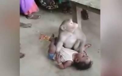 بھارت میں ایک بندر کی گھر میں گھس کر بچہ ''چرانے''کی کوشش،ویڈیو وائرل ہوگئی