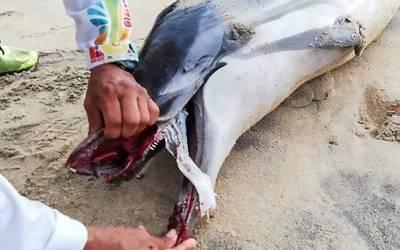 ساحل سمندر پر مردہ دوست مچھلی، اس کا معائنہ کیا گیا تو منہ میں پھنسی کیا چیز موت کی وجہ بنی؟ جان کر تمام انسانوں کو شرم آجائے