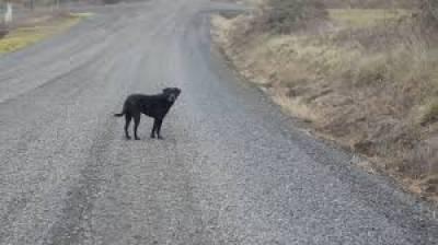 """""""خبردار ،اگر کہیں رات کو کالا کتا نظر آجائے تو یہ کام لازمی کریں """"جنات کے بارے میں ایسی بات کہ سن کر ہی رونگٹھے کھڑے ہوجائیں"""