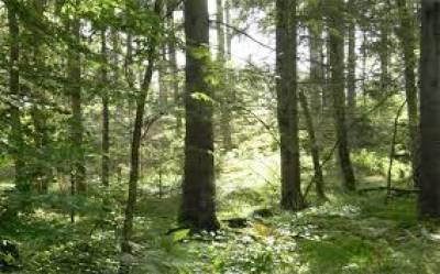 انڈین آرمی کے جوان کی جنگل میں نابالغ لڑکی سے جنسی زیادتی کی کوشش لوگوں نے چھترول کر دی