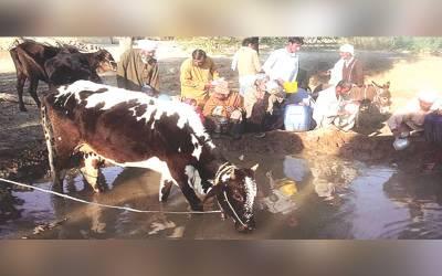تونسہ :بستی مٹھو میں انسان جانور ایک گھاٹ سے پانی پینے پر مجبور