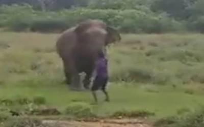 آدمی کی ہاتھی کو ہیپناٹائز کرنے کی کوشش، نتیجہ ایسا بھیانک نکلا کہ آپ بھی کانپ اٹھیں