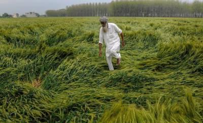 حکومت نے فصلوں کی انشورنس شروع کردی