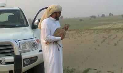 خلیجی ممالک کے شاہی خاندان کے مزید12 افراد کو تلور کے شکار کے اجازت نامے جاری، ان میں کون کون شامل ہے اور کہاں شکار کھیلیں گے؟ تفصیلات منظرعام پر
